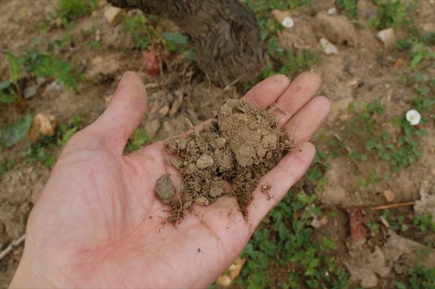 マルク ペノの畑の土
